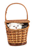 Funny kitten in basket