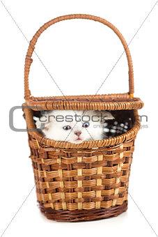 Funny kitten in basket