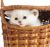 Funny kitten in basket closeup