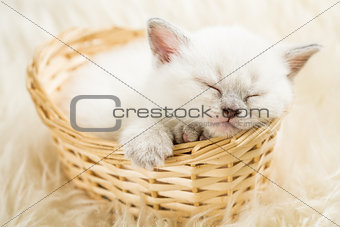 Sleeping kitten in basket