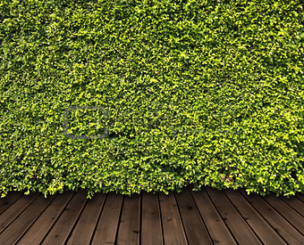 Green leaves wall and wood floor