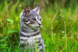 cat kitten meadow green grass animal