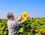 Elderly farmer and sunflowers