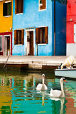 Swans In Burano, Italy