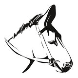 Head of Donkey. drawing