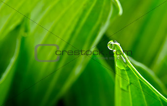 Water drop or bubble on leaf