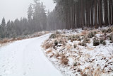 snowstorm over road in forest