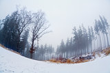 fog in winter forest, fisheye view