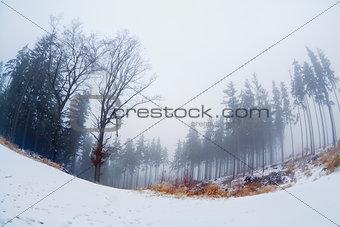 fog in winter forest, fisheye view