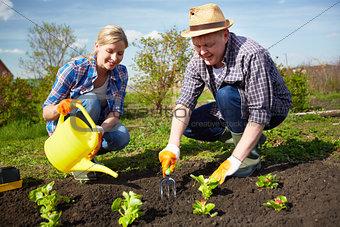 Farmers in the garden