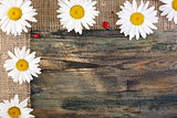 Daisies on the tape of burlap.