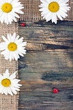 Ladybug and daisy on the tape of burlap.