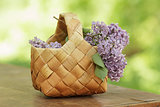 lilac flowers in birchbark basket on table