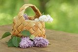 lilac flowers in birchbark basket on table