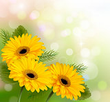 Nature background with yellow beautiful flowers. Vector illustra