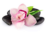 Pink orchid on the black stones