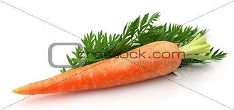 carrots with leaf
