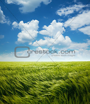 Greed Wheat Field and Blue Sky with Clouds