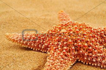 starfish on the sand of a beach