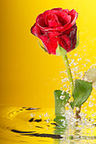 Underwater red rose surrounded by bubbles on the yellow background.