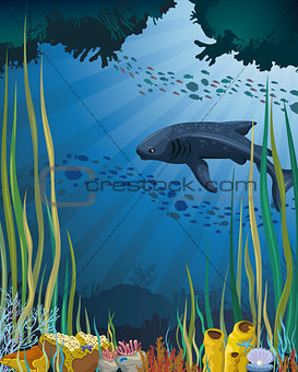 Whale shark and coral reef.