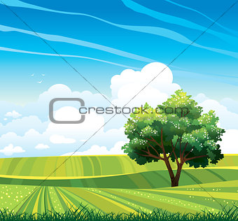 Blossom tree and green meadow