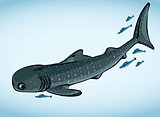 Whale shark and fish.
