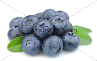 fresh blueberries with leafs