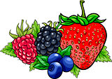 berry fruits cartoon illustration