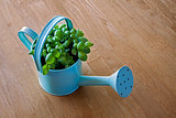 Basil Herb Container / Plant Pot.
