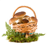 Boletus mushrooms in a basket
