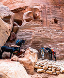 Donkeys at Petra