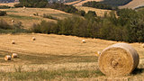 harvest time: agricultural landscape with hay bales