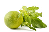 Lime with mint leaves