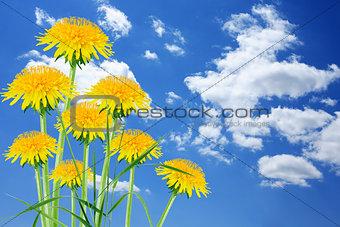 Dandelions On Sky