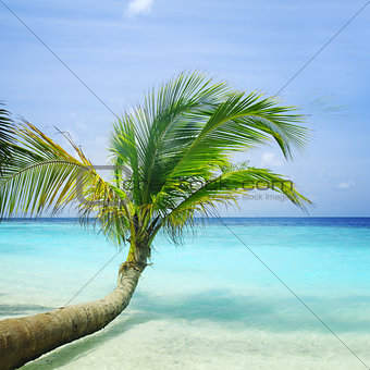 Beautiful palm tree on a tropical beach