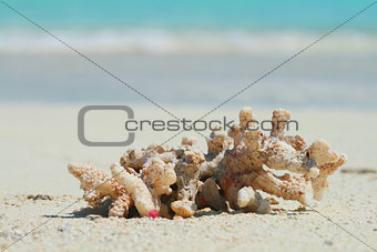 a close-up of a coral on tropical beach