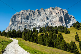 Group Sassolungo, path and forest, Dolomites
