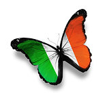 Irish flag butterfly, isolated on white