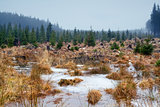 frozen swamp in Harz mountains