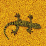 Salamander camouflage