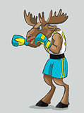 Elk - boxer