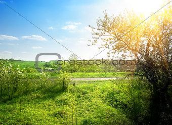 Blooming green garden