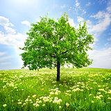Tree and wild flowers