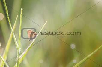 Little butterfly in the nature
