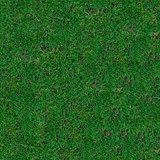 Grass. Seamless Texture.