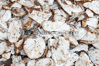 Cassava root slice