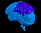 Blue brain with highlighted parietal lobe