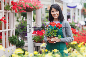 Garden center worker holding red flower while standing outside