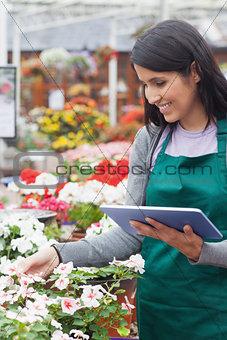 Employee choosing white flowers in garden center